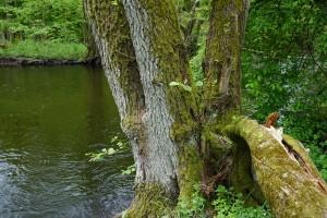 Nad rzeką Drawą
