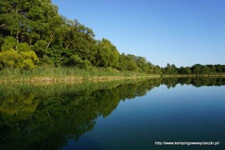 brzeg jeziora Gopło