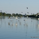 ptaki nad Gopłem