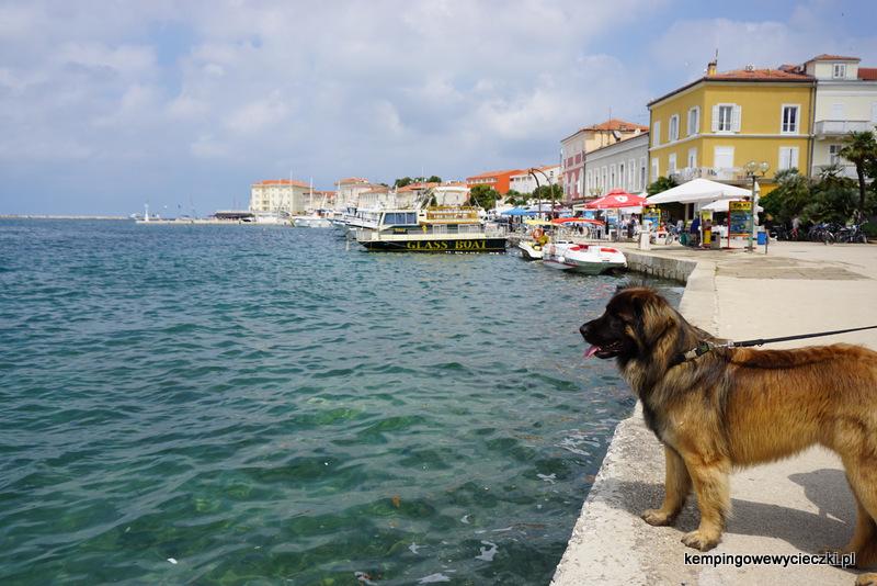 nadbrzeże w Poreć Chorwacja