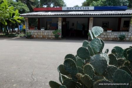 Recepcja kemping Pineta w Fazanie