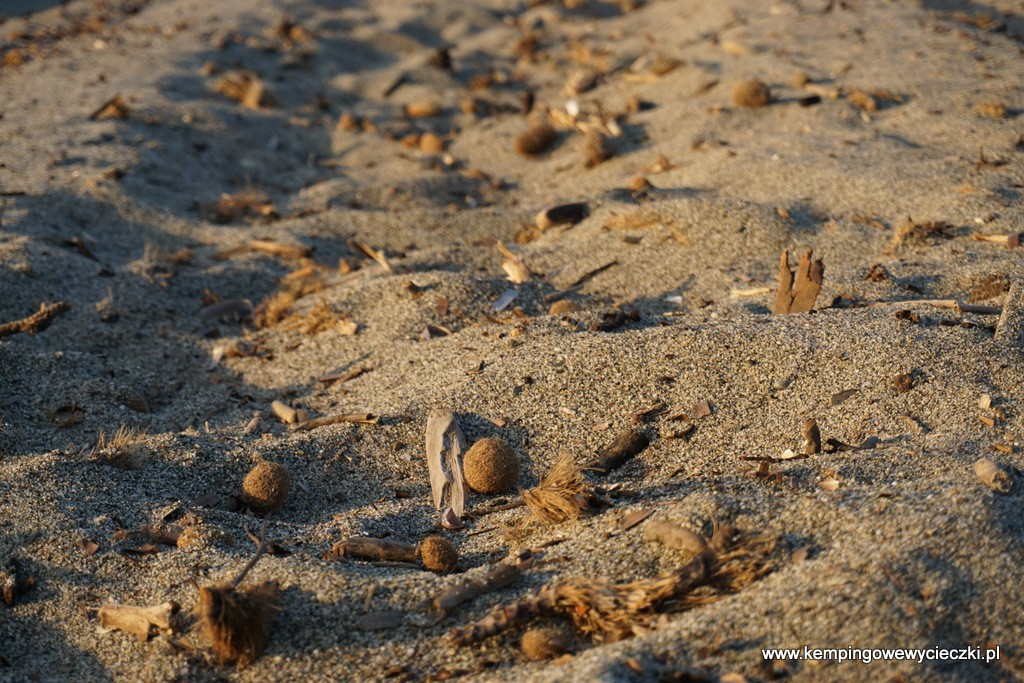 Tajemnicze kuleczki występowały na większości plaż Korsyki