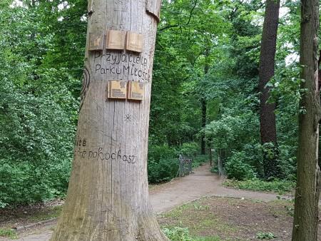 drzewo z tablicami