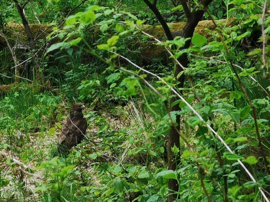 kaszubska marszruta