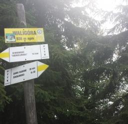Waligóra 936 m n.p.m Góry Suche i Kamienne 13/28
