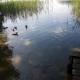 Jezioro Niesłysz woj. lubuskie